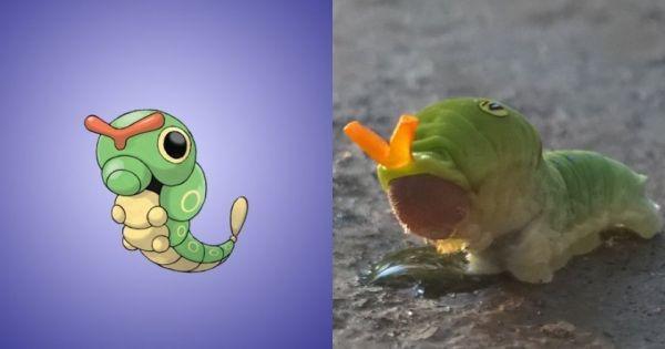 Similitud de especie pokémon Caterpie en la vida real